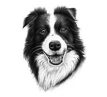 Border Collie by Nicole Zeug
