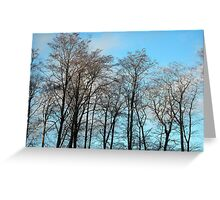 Tarradale Trees Greeting Card