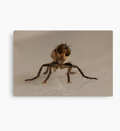 the fly, insect macro Canvas Print