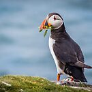 Puffin Bearing Gifts by vivsworld