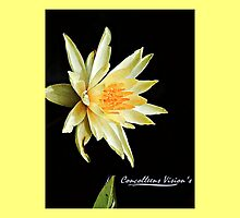 Just Lilly 2 by Connie Smith
