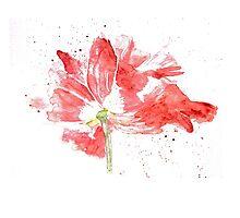 Tulip Explosion by Elcee