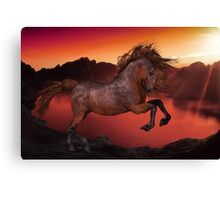 A Horse In The Sunset Canvas Print