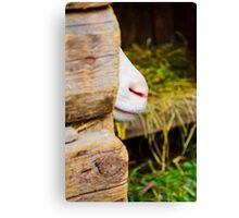 white kid playing in the wooden  Canvas Print
