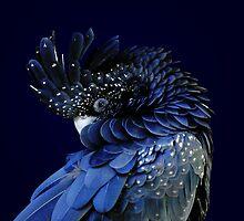 Fibonacci Cockatoo by DebiDalio