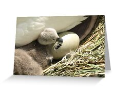 Hello Little Brother Greeting Card