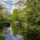 Oldbridge Canal  by Martina Fagan
