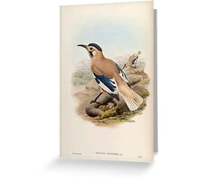 Birds of Asia John Gould 1883 V1 V7 360 Podoces Biddulphi Greeting Card