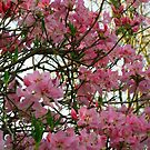 Spring on the Whiteside mountain, NC by arvyart