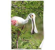 Spoonbill Smile Poster