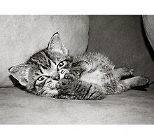 Kitten Giggles Photographic Print