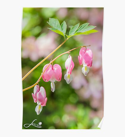 Lovely pink in the Spring Poster