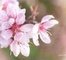Peach Blossom Peace by Anita Pollak