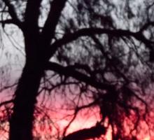 Sun setting behind desolate trees Sticker