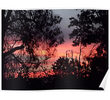 Sunset behind desolate trees 2 Poster