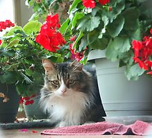 Prince of the Geraniums by Righteous Zombie Photography