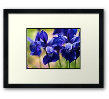 Blue Iris Patch Framed Print