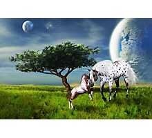Horses Love Forever Photographic Print