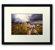 The Little Foal Framed Print