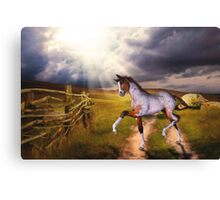 The Little Foal Canvas Print