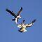 A Bird or Birds in Flight