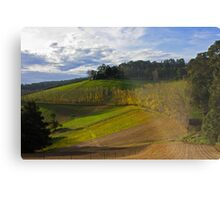 Afternoon Sun Metal Print