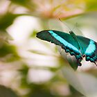 butterfly by Sajeev Chandrasekhara Pillai