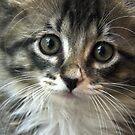Kitten Augie by Elizabeth  Lilja