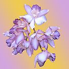 ORCHID ORCHID WITH BACKGROUND by Thomas Barker-Detwiler