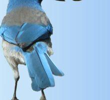 Beautiful Blue Jay with Peanut Sticker