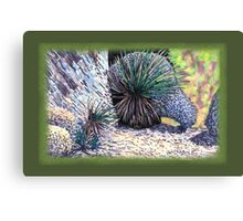 Boulders and Desert Spoons * Canvas Print