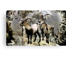 Natures Camouflage Canvas Print