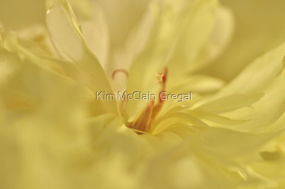 Peony, Untouched Photo by Kim McClain Gregal