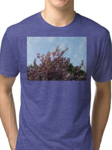 Pink Tree Blossoms against Blue Sky Tri-blend T-Shirt