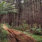 The Dark Dark Wood - Penrose State Forest NSW Australia by candysfamily