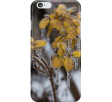 Ice Storm 2013 - My Garden in the Morning  iPhone Case/Skin