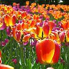 Spring bash by MarianBendeth
