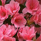 Azaleas In The Garden by Lanis Rossi