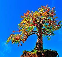 Autumn Bonsai by NaturesEarth