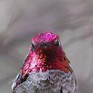 Red head hummingbird by loiteke