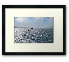 San Francisco Pelican Bay Framed Print