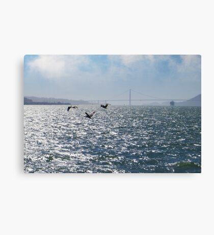 San Francisco Pelican Bay Canvas Print