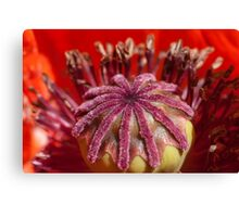 the heart of a poppy Canvas Print