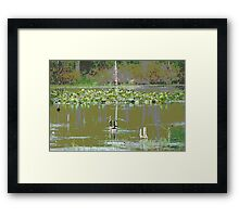 Marsh Waterfowl  Framed Print