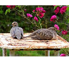 Mr and Mrs Dove Photographic Print