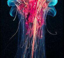 Luminescent Jellyfish by Cheatahgirl54
