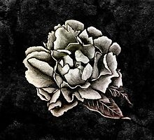 Peony by pikedesign