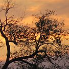 Tree Silhouette~ by virginian