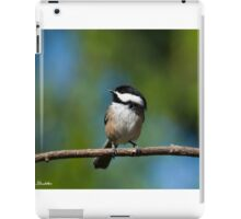 Black Capped Chickadee Perched on a Branch iPad Case/Skin