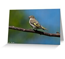 Pine Siskin Perched on a Branch Greeting Card